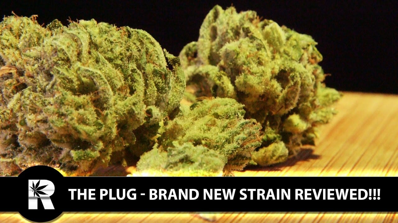 Cannabis Up Close #12: The Plug (Indica) – Strain Review